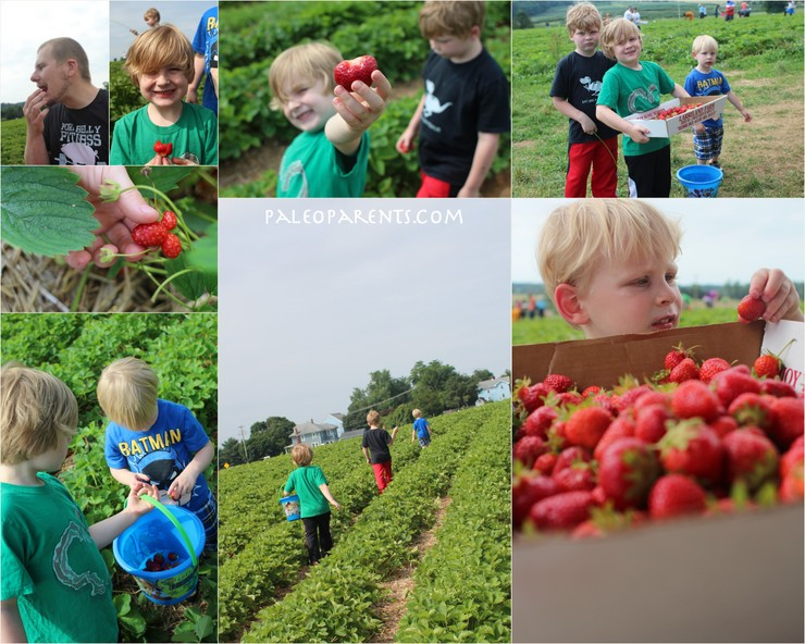 Picking Berries for Fruit Pizzas on Paleo Parents