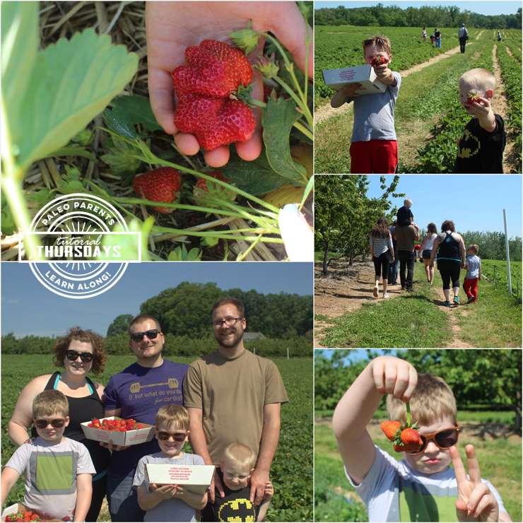 Strawberry Farm by Paleo Parents