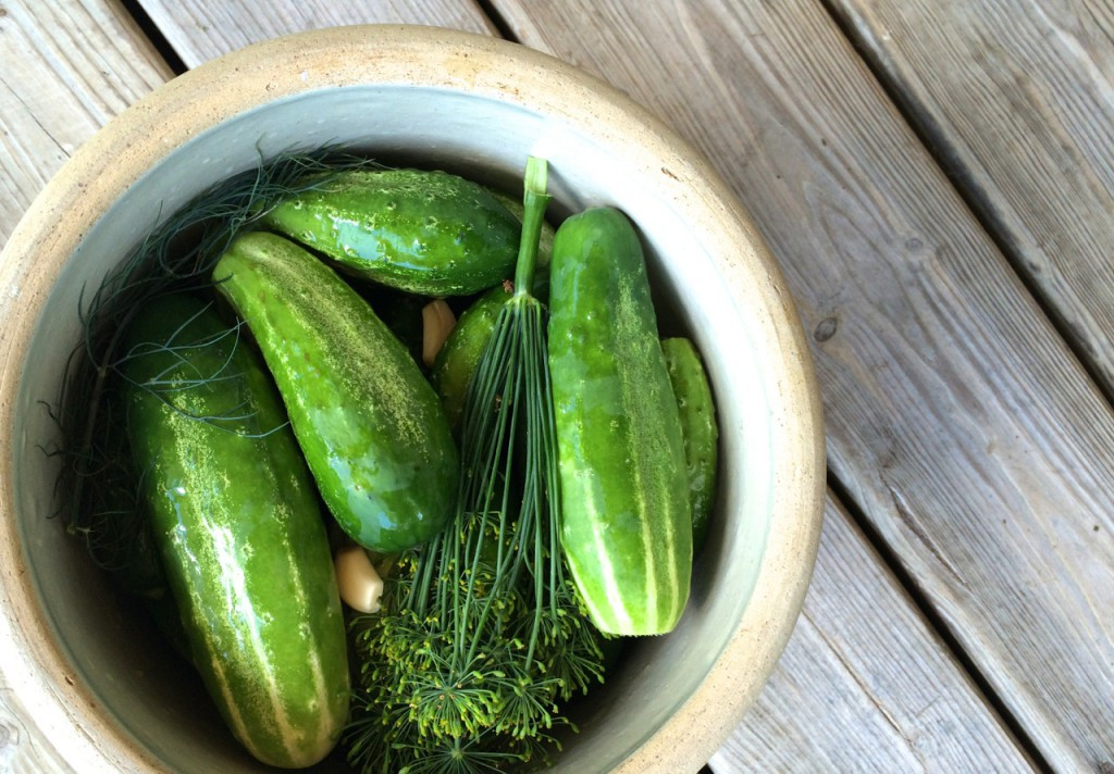 Cukes in crock, Guest Post: Simple & Easy Preserving, Whole-Fed Homestead- Beginner's Guide to Dehydrating, Freezing and Fermenting