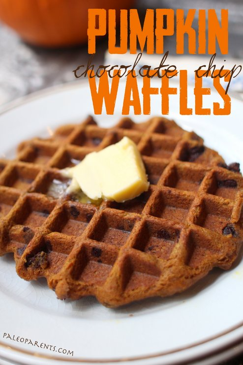 Chocolate Chip Pumpkin Waffles by PaleoParents