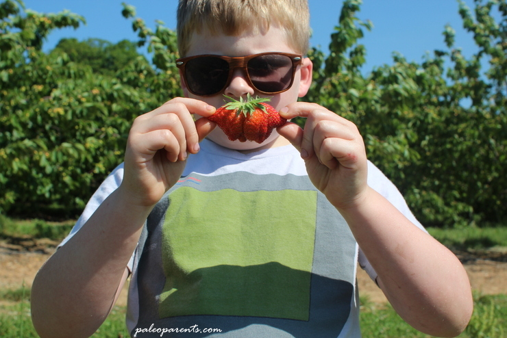 Strawberry Cultivars on Paleo Parents