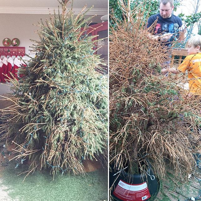 dead tree; All about our Paleo holiday celebration, including WHAT happened to our tree! Paleo Parents Weekend Wrap Up
